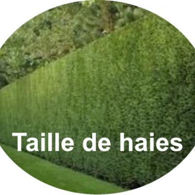 Taille de haies thuyas rond texte